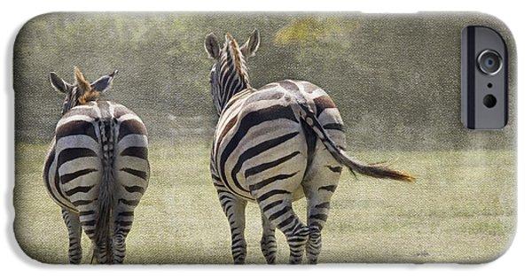 Zebra iPhone Cases - Strolling Home iPhone Case by Rebecca Cozart