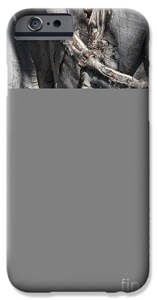 Strong Roots in Florida iPhone Case by Carol Groenen