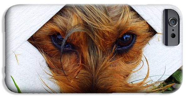 Cute Puppy iPhone Cases - Stuck On You iPhone Case by Karen Wiles