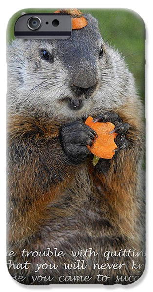 Groundhog iPhone Cases - Succeeding iPhone Case by Paul W Faust -  Impressions of Light