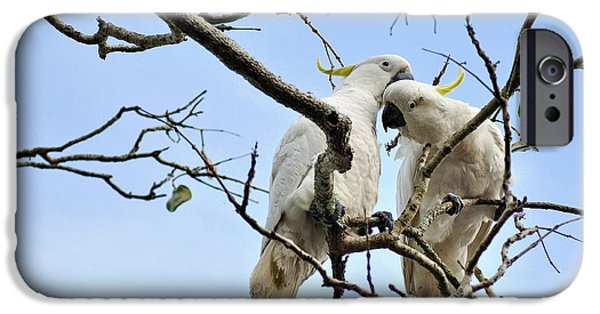 Cockatoo iPhone Cases - Sulphur Crested Cockatoos iPhone Case by Kaye Menner