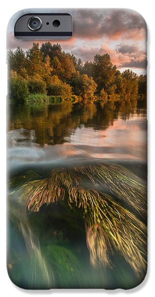 Tree Reflection iPhone Cases - Summer afternoon iPhone Case by Davorin Mance