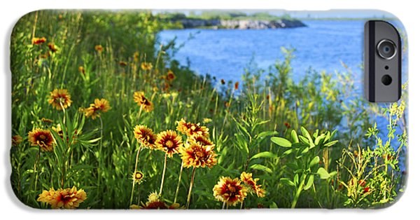 Meadow Photographs iPhone Cases - Summer in Toronto park iPhone Case by Elena Elisseeva