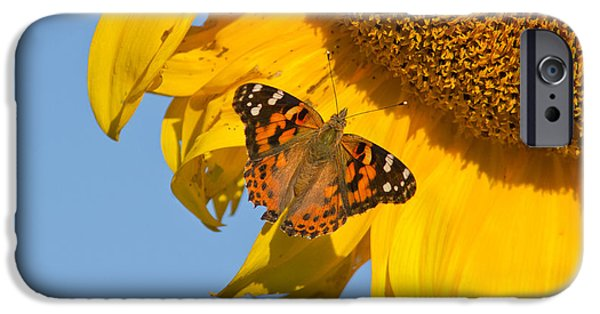 Eating Entomology iPhone Cases - Summer time iPhone Case by Mircea Costina Photography
