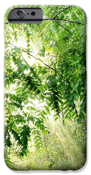 Sun Rays through Black Walnut Leaves iPhone Case by Thomas R Fletcher