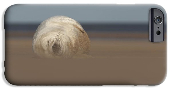 Ocean Mammals iPhone Cases - Sun Sea and Sand iPhone Case by Andy Astbury