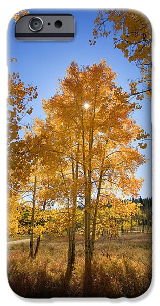 Northern Colorado iPhone Cases - Sun Through Aspens iPhone Case by Ron Dahlquist - Printscapes