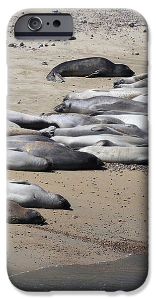 Sunbathing Elephant Seals Along A Beach At Point Reyes California . 7D16063 iPhone Case by Wingsdomain Art and Photography