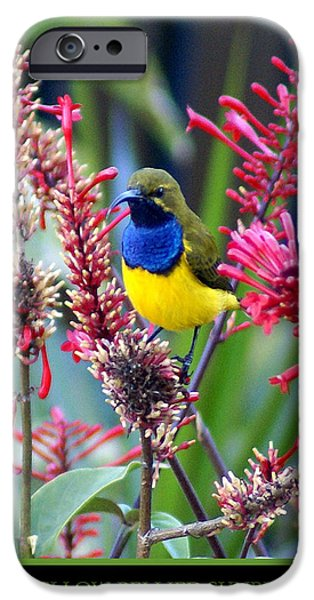 Flora iPhone Cases - Sunbird iPhone Case by Holly Kempe
