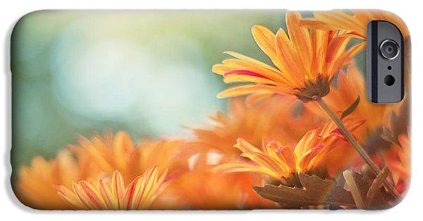 Chrysanthemum iPhone Cases - Sundance iPhone Case by Amy Tyler