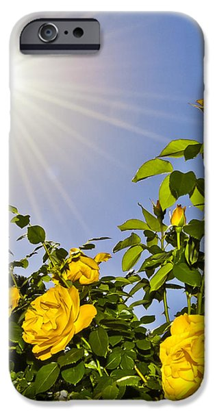 Sunflare and Yellow Roses iPhone Case by Amber Flowers