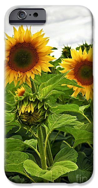Agriculture iPhone Cases - Sunflower field iPhone Case by Elena Elisseeva