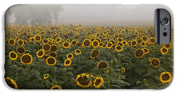 Sunflower Photograph iPhone Cases - Sunflower Morning ll iPhone Case by Rob Travis