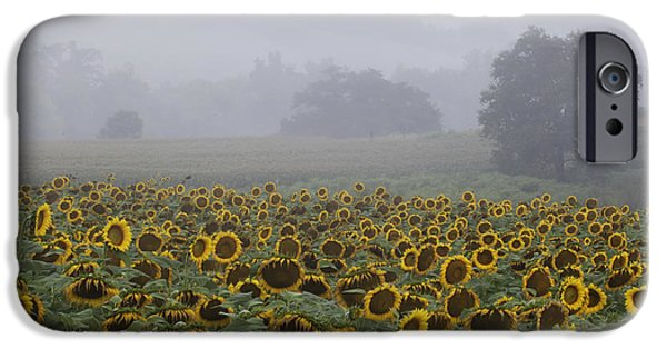 Sunflower Photograph iPhone Cases - Sunflower Morning iPhone Case by Rob Travis
