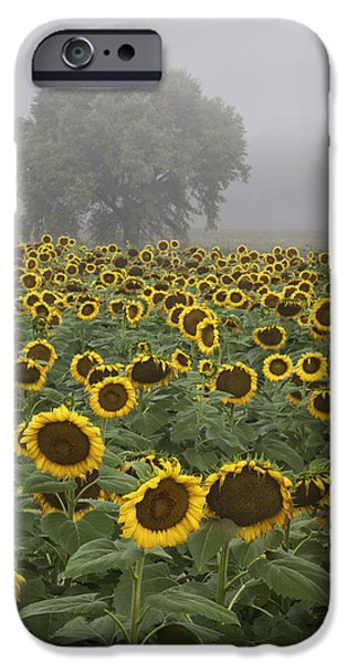 Sunflower Photograph iPhone Cases - Sunflower Morning Vertical iPhone Case by Rob Travis