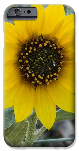 Sunflower Smile iPhone Case by Sara  Mayer