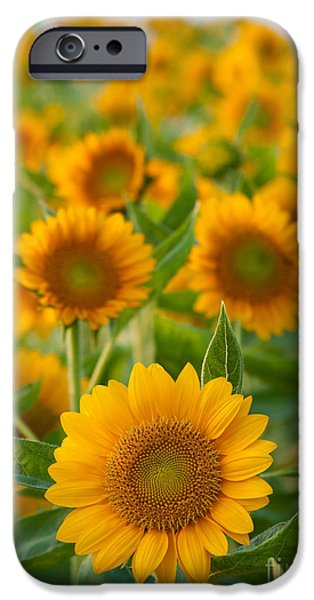 Agriculture iPhone Cases - Sunflowers iPhone Case by Atiketta Sangasaeng