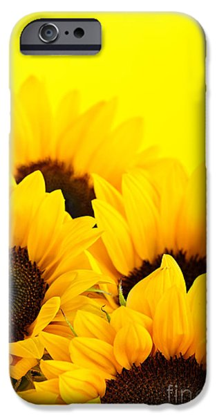 Colorful Sunflower iPhone Cases - Sunflowers iPhone Case by Elena Elisseeva