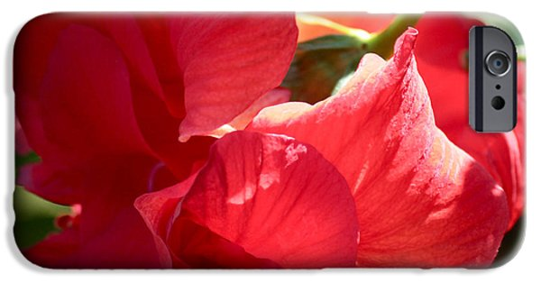 Sunlight On Flowers iPhone Cases - Sunlight on Red Hibiscus iPhone Case by Carol Groenen