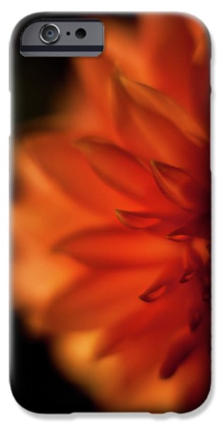 Dahlia iPhone Cases - Sunlit Dahlia iPhone Case by Mike Reid