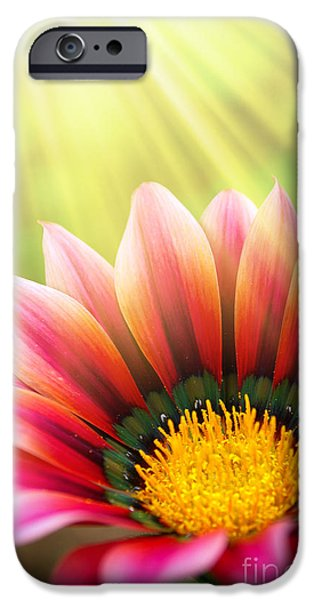 Concept Photographs iPhone Cases - Sunny Daisy iPhone Case by Carlos Caetano