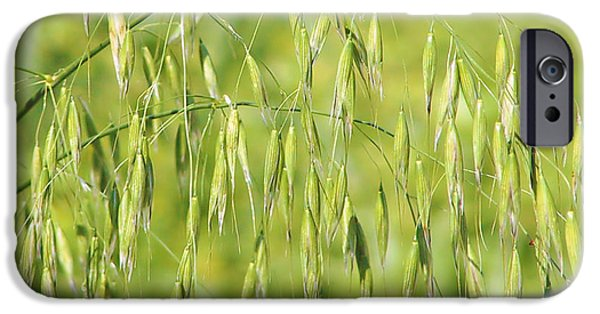 Oatmeal iPhone Cases - Sunny day at the oat field iPhone Case by Christine Till