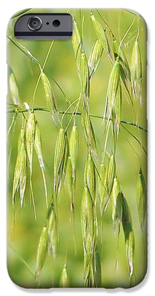 Sunny day at the oat field iPhone Case by Christine Till
