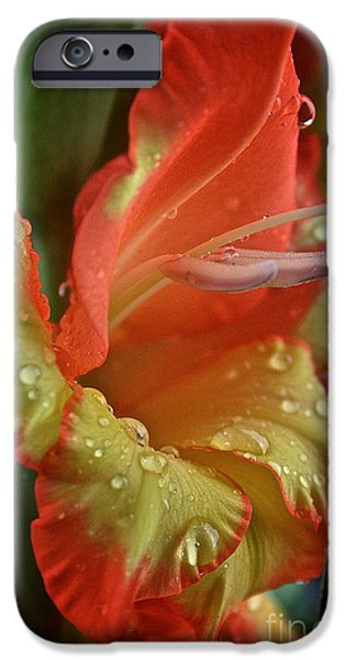 Sunny Glads iPhone Case by Susan Herber
