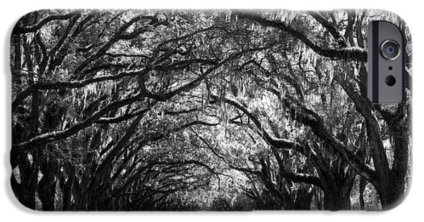 Live Oaks iPhone Cases - Sunny Southern Day - Black and White iPhone Case by Carol Groenen