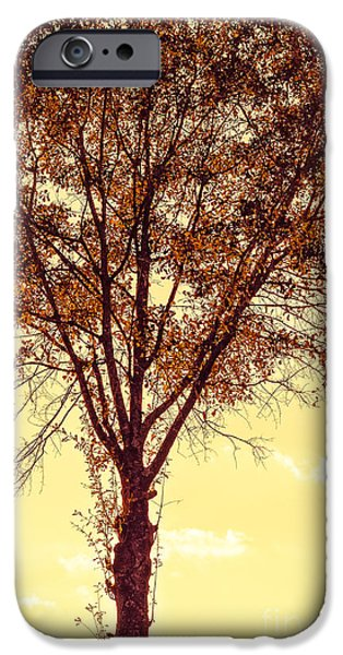 Snake iPhone Cases - Sunny Tree iPhone Case by Reflections by Brynne Photography