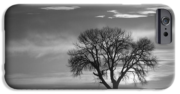 Tree Art Print iPhone Cases - Sunrise Silhouette Black and White iPhone Case by James BO  Insogna