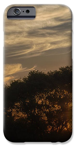 Sunset at the Oasis iPhone Case by Joan Carroll