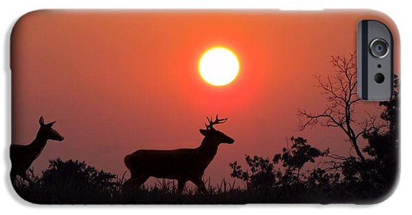 David iPhone Cases - Sunset Silhouette iPhone Case by David Dehner