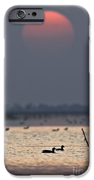 Lakescape iPhone Cases - Sunset with coots iPhone Case by Hitendra SINKAR