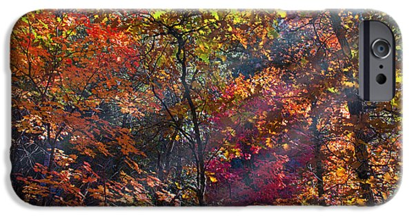 West Fork iPhone Cases - Sunshine in the Trees iPhone Case by Brian Lambert