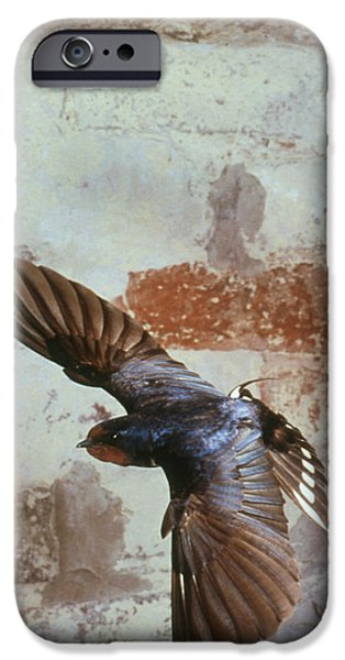 Hirundo iPhone Cases - Swallow In Flight iPhone Case by Andy Harmer