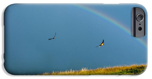 Barn Swallow iPhone Cases - Swallows under a Rainbow iPhone Case by Thomas R Fletcher