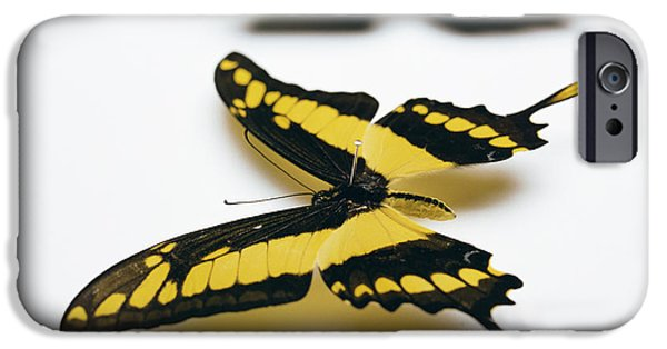 Blue Swallowtail iPhone Cases - Swallowtail Butterflies iPhone Case by Lawrence Lawry
