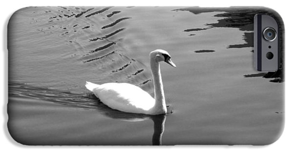 Swans... Photographs iPhone Cases - Swan iPhone Case by Julian Bralley