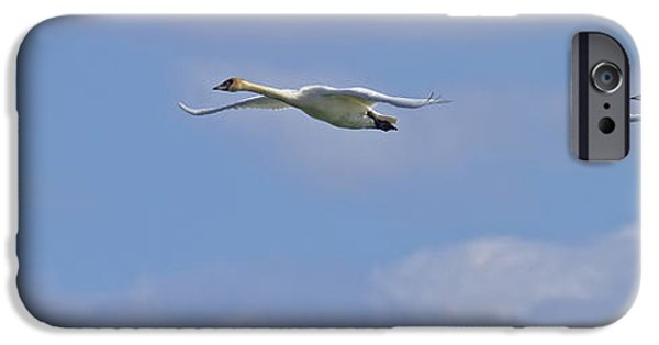 Swans... iPhone Cases - Swans In Flight, Yukon iPhone Case by Robert Postma