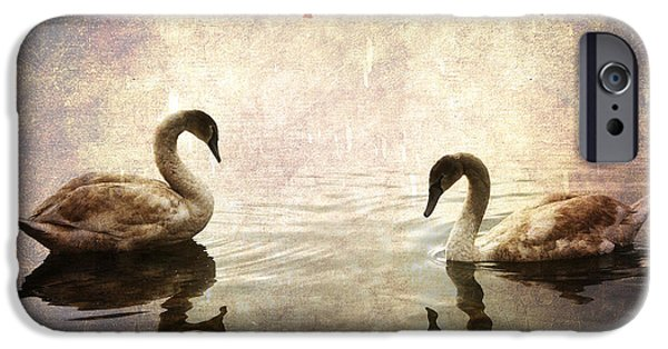 Swans... iPhone Cases - swans on Lake Varese in Italy iPhone Case by Joana Kruse