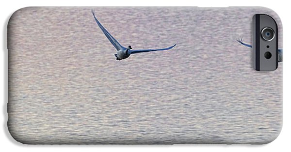 Swans... iPhone Cases - Swans Taking Off From Tagish River iPhone Case by Robert Postma