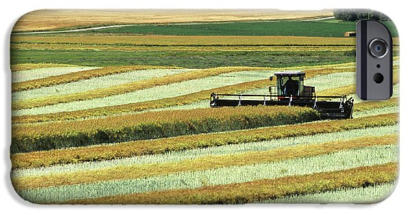 Canola Field iPhone Cases - Swathing Canola, Tiger Hills, Manitoba iPhone Case by Dave Reede