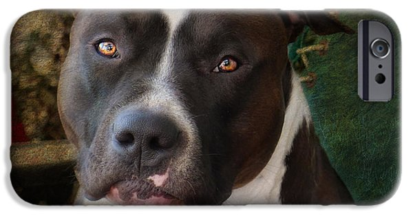 Dog iPhone Cases - Sweet Little Pitty iPhone Case by Larry Marshall