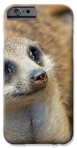 Sweet Meerkat Face iPhone Case by Carolyn Marshall