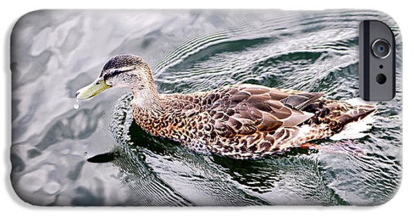 Duck iPhone Cases - Swimming duck iPhone Case by Elena Elisseeva