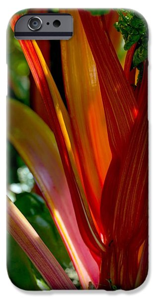 Swiss Chard iPhone Cases - Swiss Chard (beta Vulgaris) iPhone Case by Dr Keith Wheeler