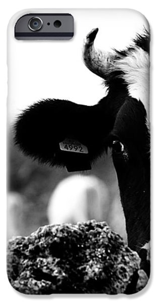 Swiss Horn iPhone Cases - Swiss Made - A Black And White Cow What Else iPhone Case by Pedro Cardona