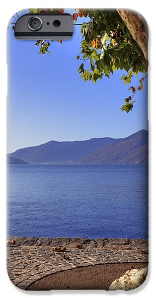 Sycamore iPhone Cases - sycamore tree at the Lake Maggiore iPhone Case by Joana Kruse