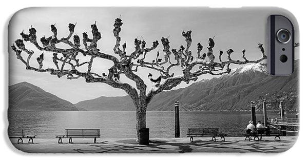 Ascona iPhone Cases - sycamore trees in Ascona - Ticino iPhone Case by Joana Kruse